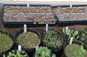 Prop of Garden Plants