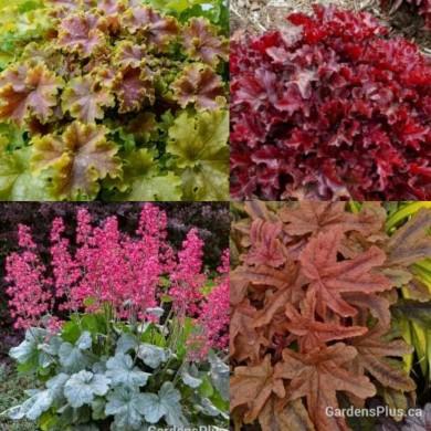 gardensplus